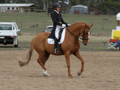 DVD - RIDING AND TRAINING THE 'GREEN' HORSE