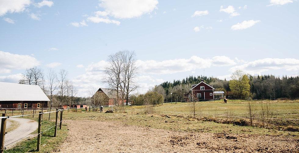 Landskapsbild med ett rött hus, ett stall och några hästar som betar i hagar.
