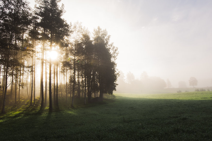 Soluppgång emellan träd i dimma