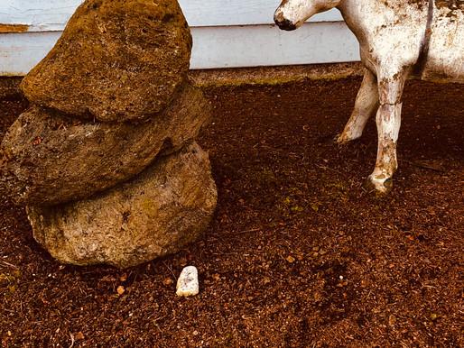 Donkeys Like Balance