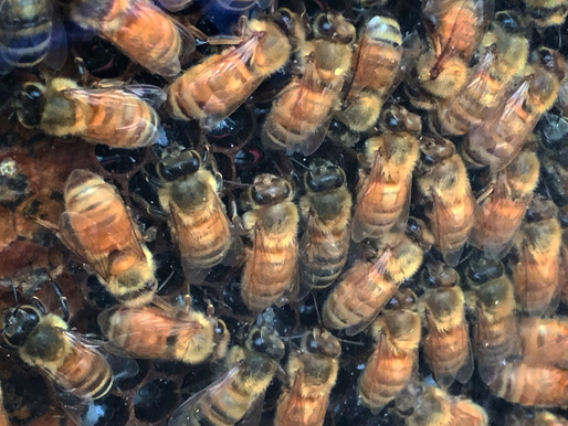 Celebrate The Humble Bumble...May 20th is World Bee Day!