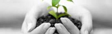 planta crecimiento.jpg