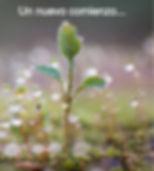 plantita%2520creciendo_edited_edited.jpg