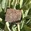 Thumbnail: Pine Tar Body Bar (Vegan Friendly)