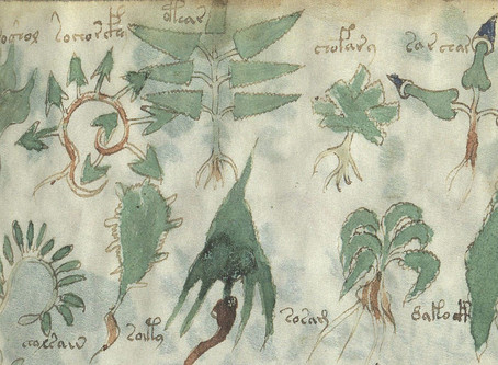 The Voynich Manuscript: A Medieval Mystery