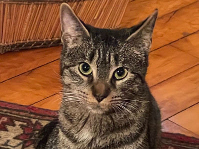 Herbie the cat - a Fund is created