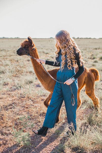 alpaca_minis_100519_0064.jpg