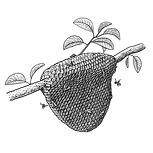 Beeswax Sativa Botanicals.png