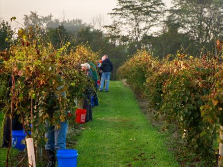 It's Harvesting Season!
