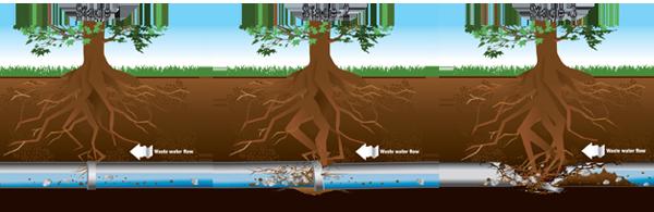 rootprogression.png