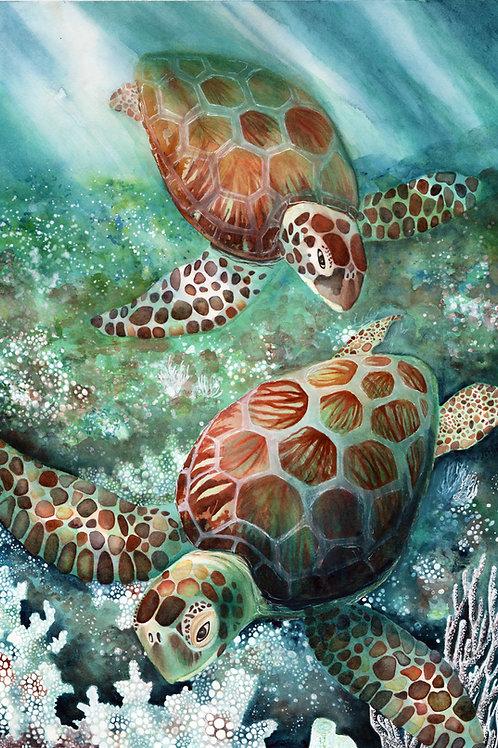 Sea Turtles (prints available)