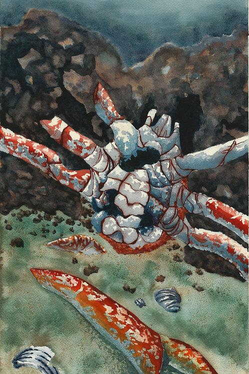 Dismembered Crab