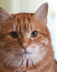 Cat%2520Worthington_edited_edited.jpg
