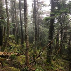 cannon alpine woods