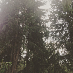 breakabean pines
