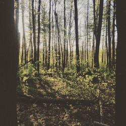 madbury woods