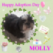 Craft Project 7MOLLIEADOPTDAY.png