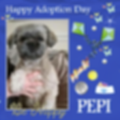 Craft Project 7PEPI ADOPT DAY.png