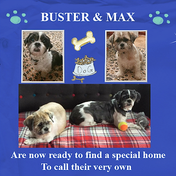Craft Project 5BUSTER AND MAXXX.png
