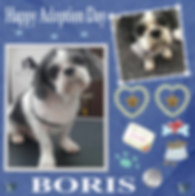 Craft Project 3BORIS ADOPTION.png