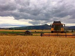Harvest-2020-3.jpg