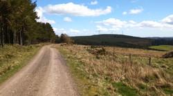 Pitmedden Forest