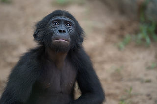 Balangala sitting. Photo by Leon Haberkorn, 2019.-2.JPG