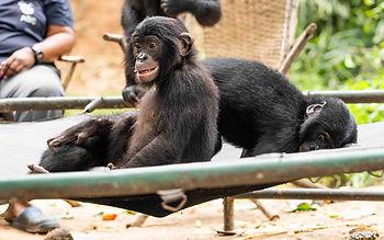 Diyoko (left) and Tshumbulu on trampoline - cropped by Lisa Murray.jpg