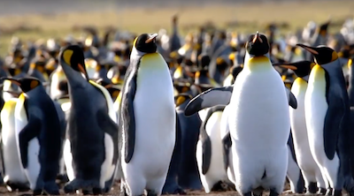 FALKLAND ISLANDS: A land of... Penguins, Adventure and Nature
