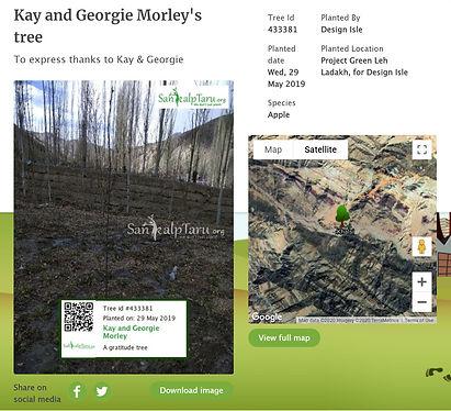 tree plantation.jpg