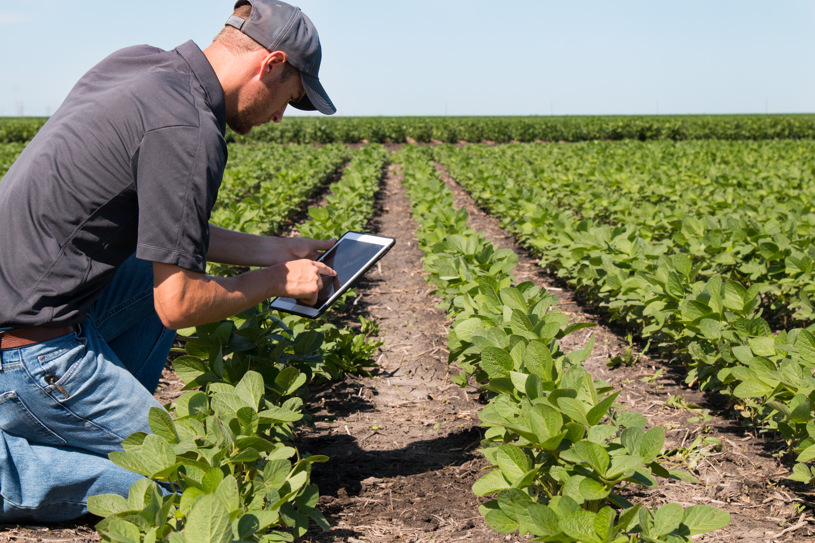 digital_farming.jpg
