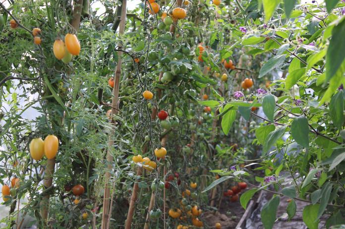 Tomathuset på Jord & Bord