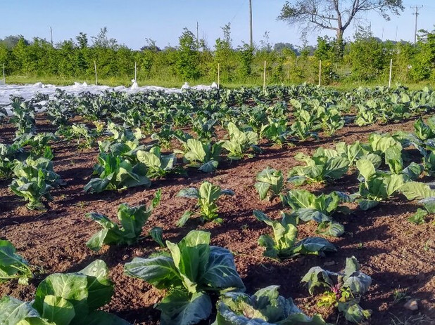 Ekologisk köksträdgård