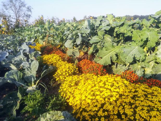 Blommor och grönsaker växer hand i hand