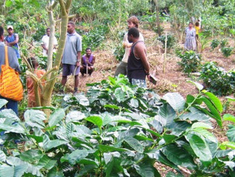 Press Release: PLN Australia facilitates private investment in Tanna Coffee, Vanuatu