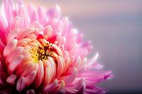 flower-202483_1920.jpg