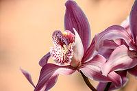 orchidée forfait stylisme