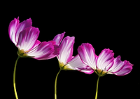 flowers-2708995_1920.png
