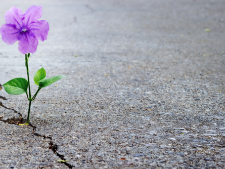 Resiliency: The Hidden Hero of Overcoming Obstacles