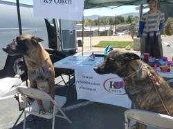 K9 Coach Dogs