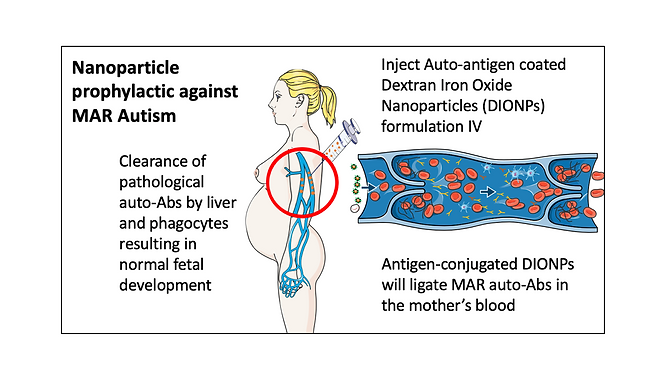 Towards a Nanoparticle-based Prophylactic for Maternal Autoantibody-related Autism