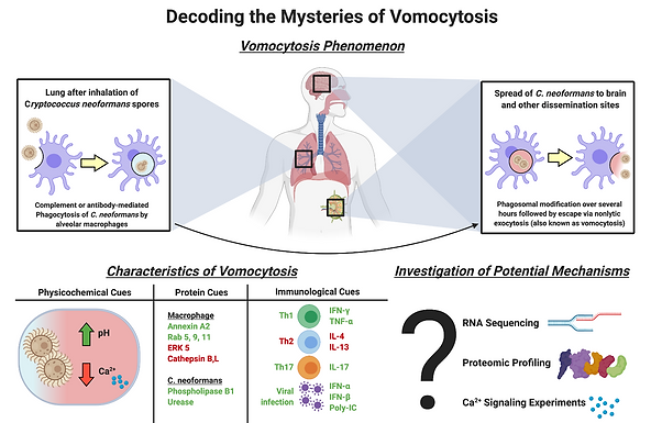 Understanding controlled vomocytosis in phagocytic cells