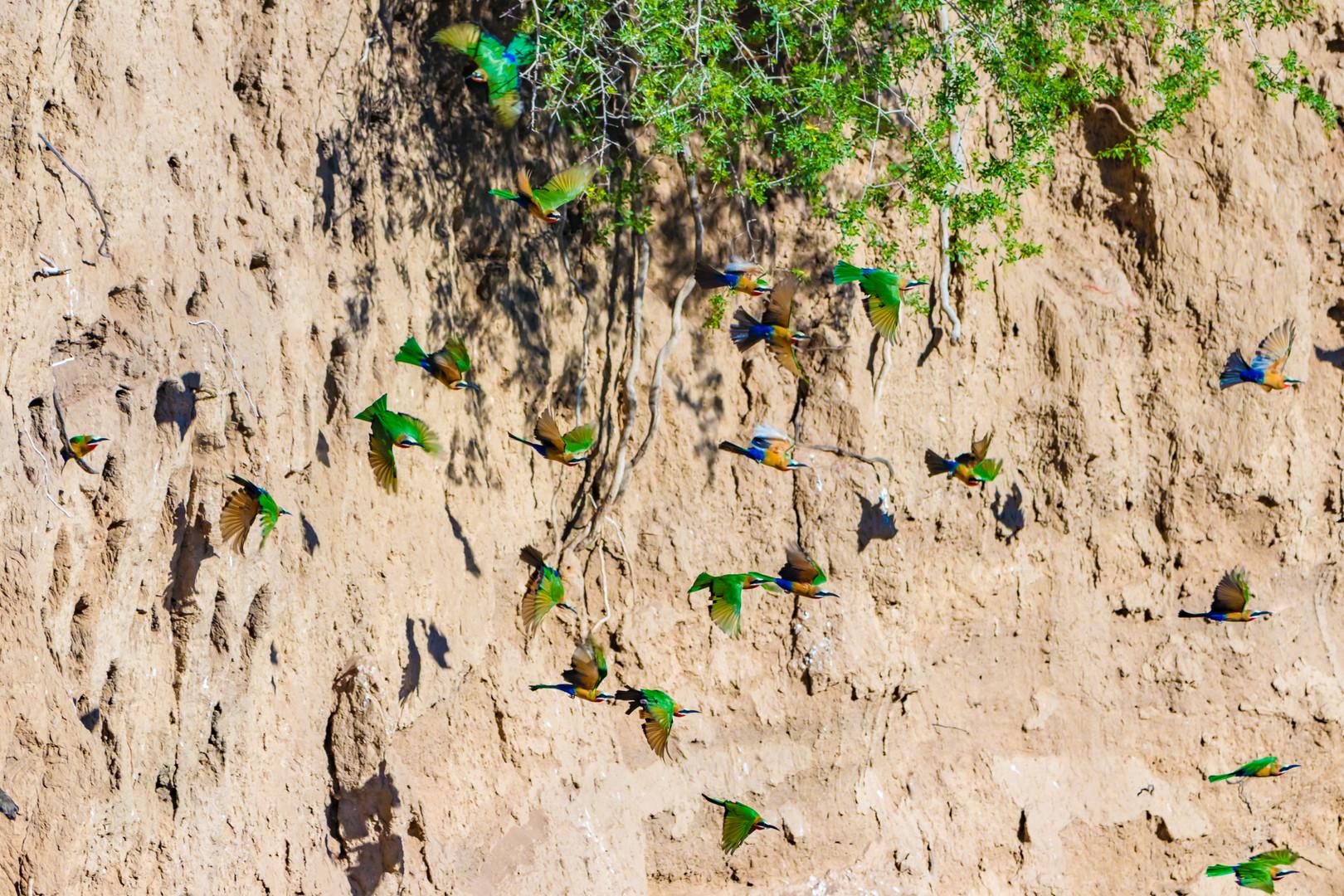 Birdwatching-7.jpg