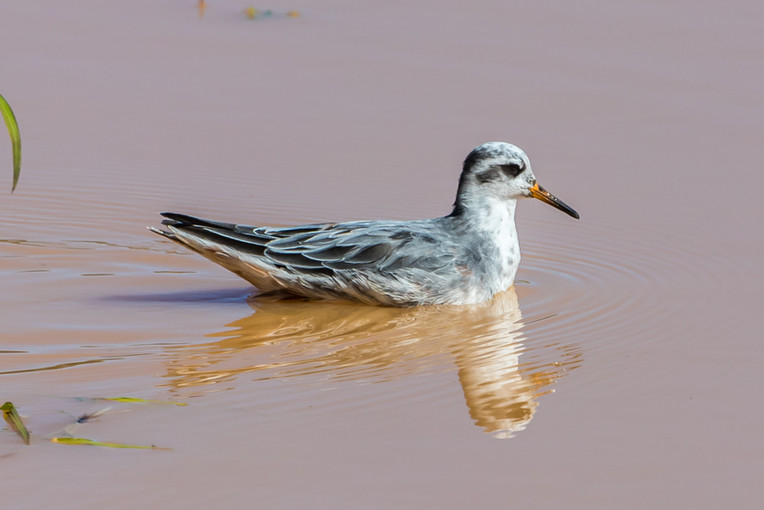 Birdwatching-9.jpg