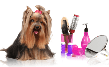 dog_grooming_diy.png