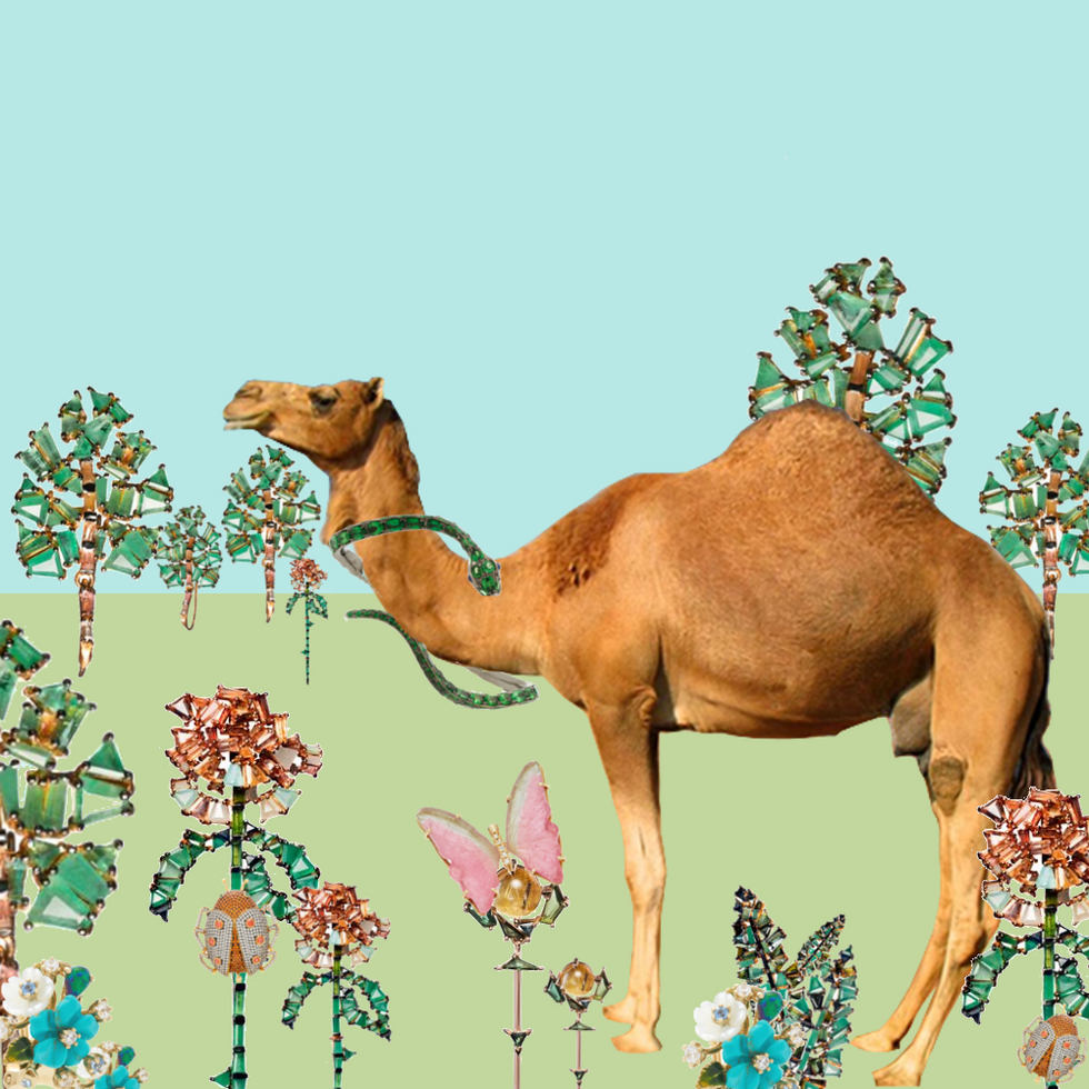 A Camels Journey to a Chic Place: Pt 1