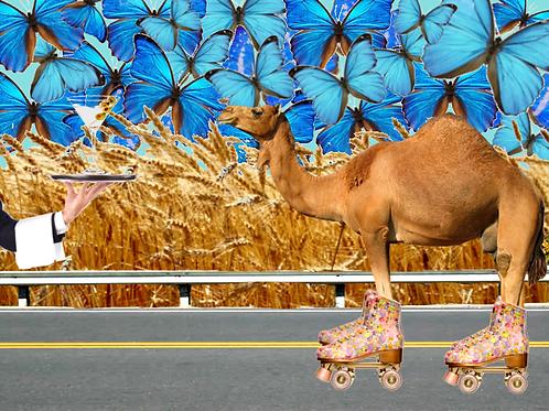 "Camel Wants A ""Tini"