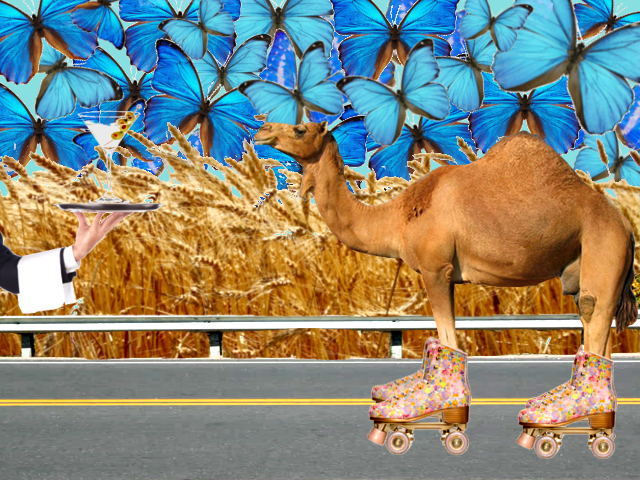 The Things a Camel Will Do For A good 'Tini
