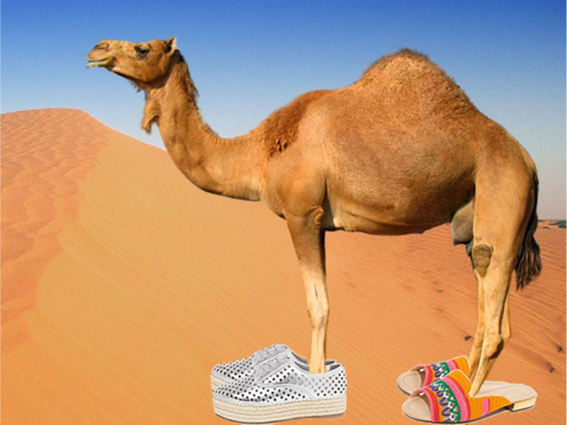 The Hump Day Camel strikes again