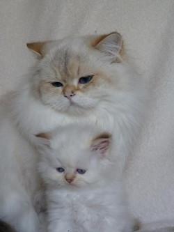 Mushu et ma belle Harielle...